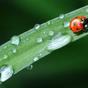rainnig