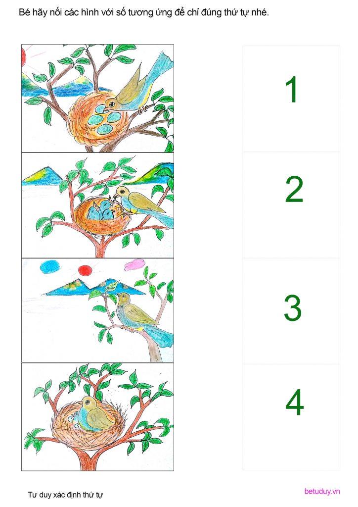 Chim de trung
