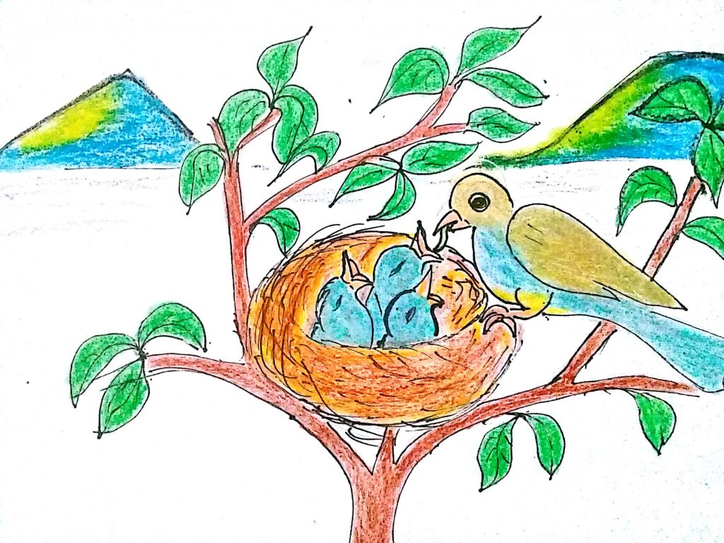 betuduy-Chim đẻ trứng