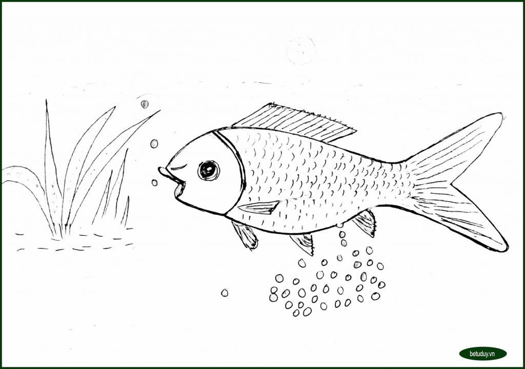 Bé tư duy - Vòng đời của cá