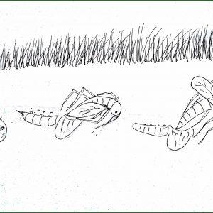 Bé tư duy - Vòng đời của muỗi