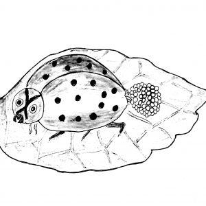 bé tư duy - vòng đời của ếch