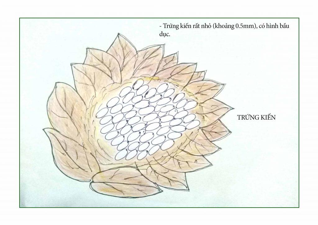 Bé tư duy - Trung kien_edit