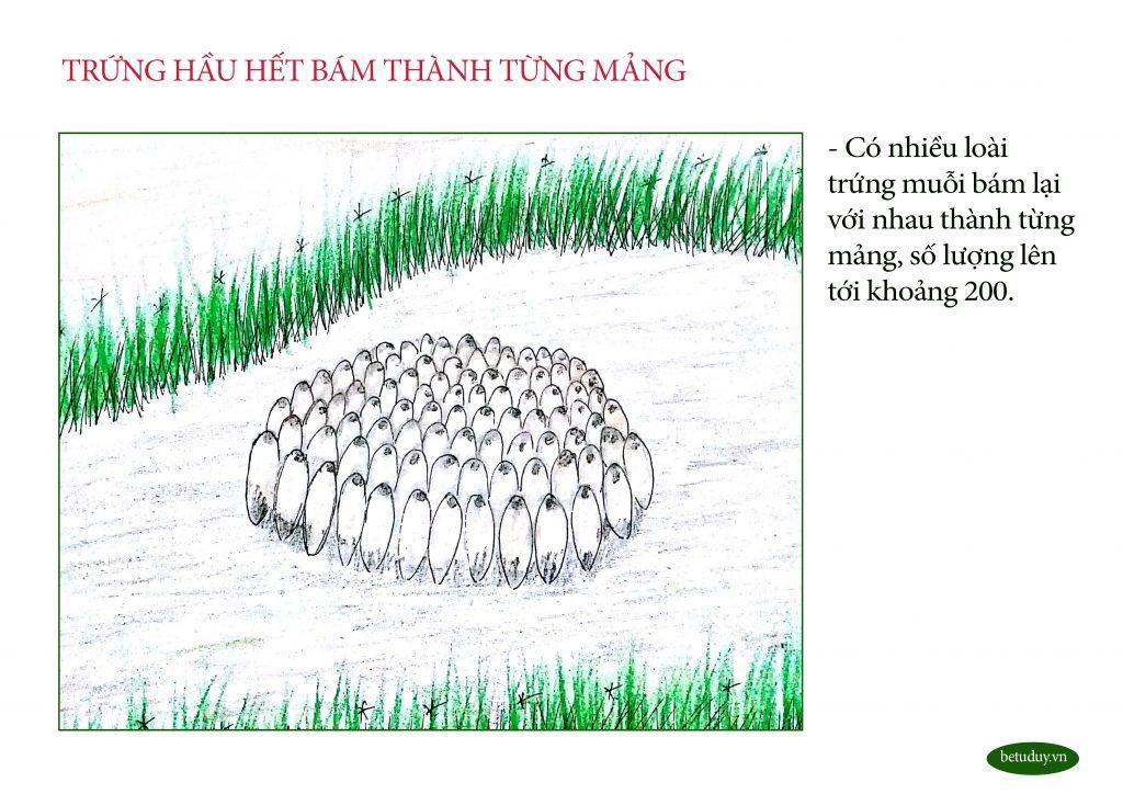 Bé tư duy - Trứng muỗi