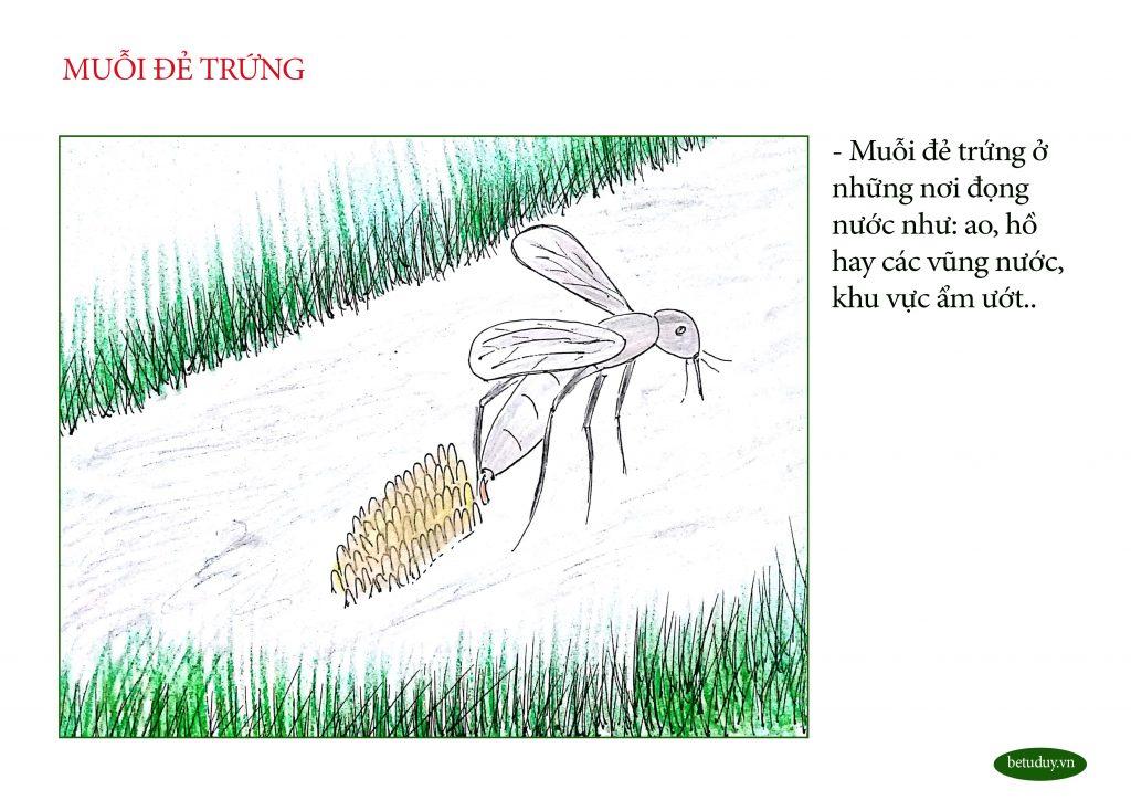 Bé tư duy - trứng muỗi 1