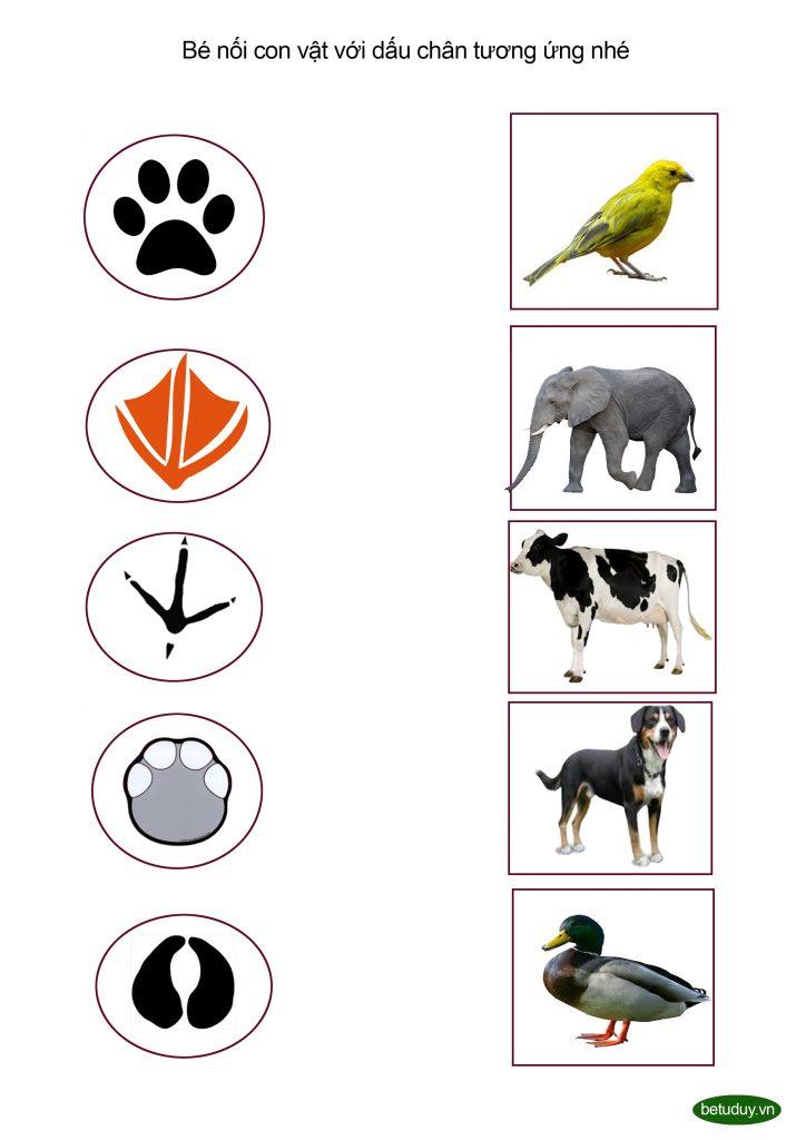 Bé tư duy-Con vật và dấu chân