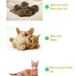 Bé tư duy - how a cat grow