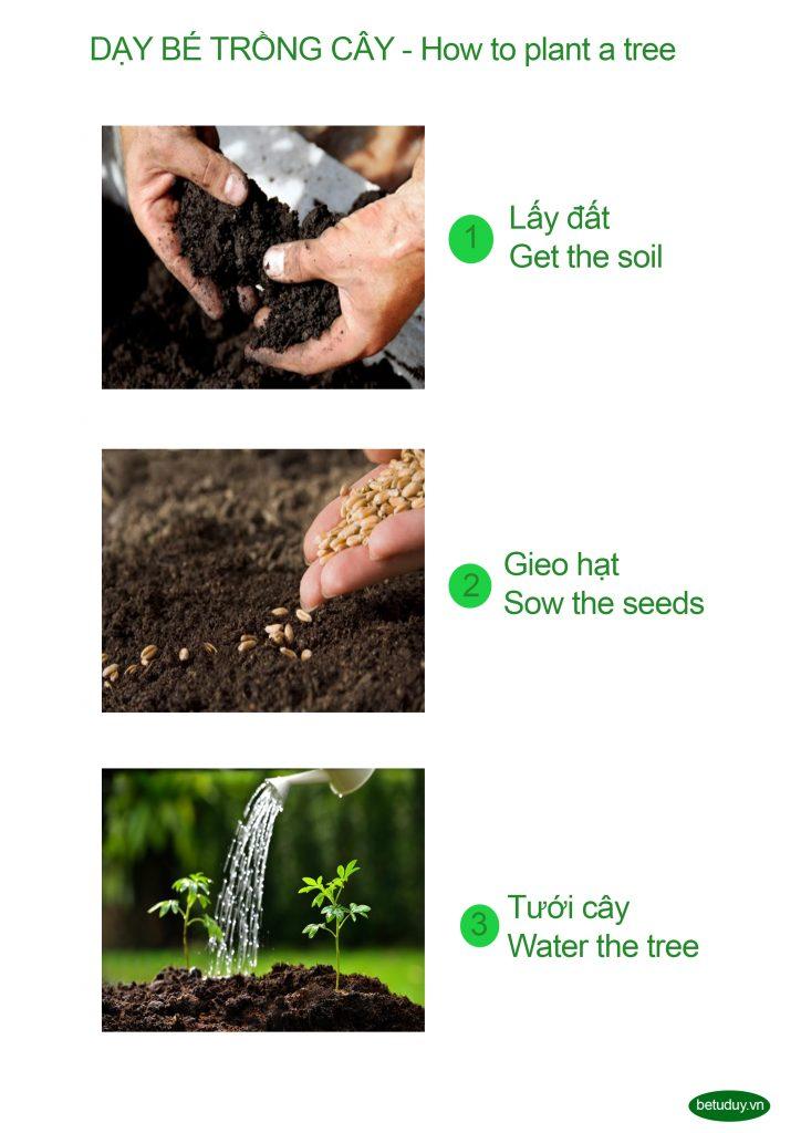 Bé tư duy - how to plant a tree