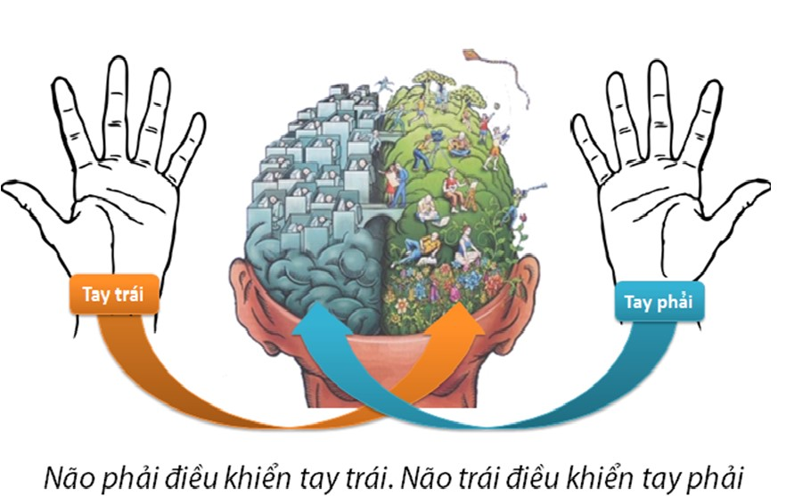 não trái của trẻ