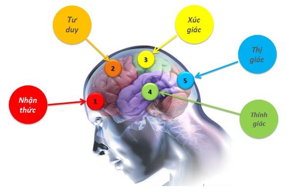 Cơ chế ghi nhớ của não bộ 1