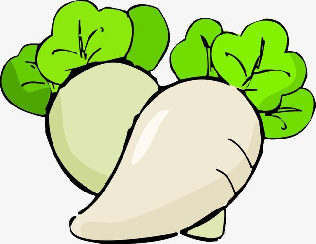 củ cải trắng 3