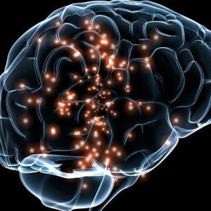 nêp nhăn trong não