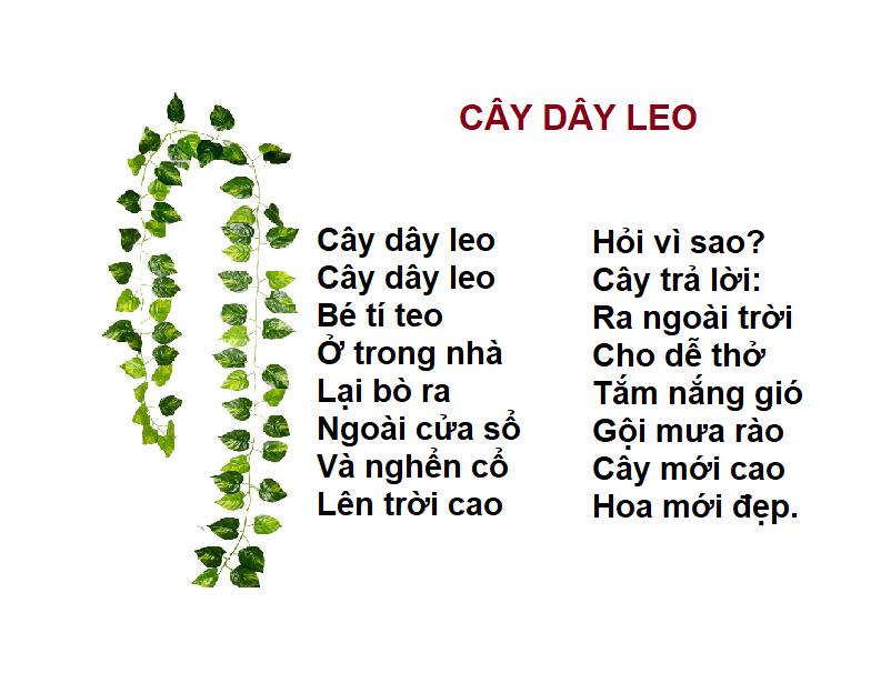 CÂY DÂY LEO