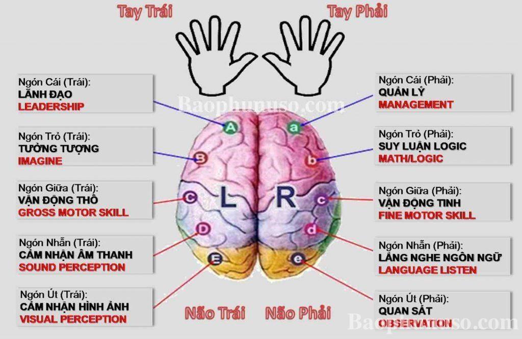dạy trẻ bằng 2 bán cầu não 1