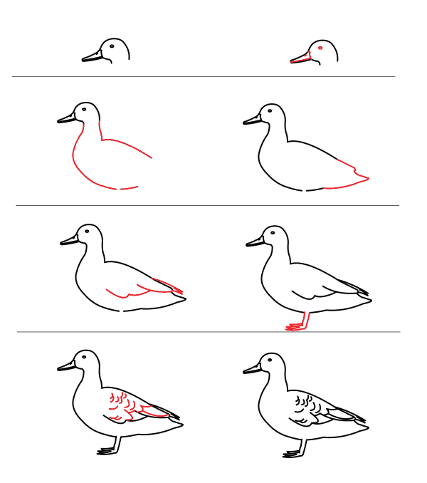 how to draw a duck 5