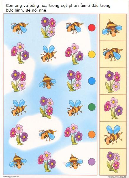 hinh dang hoa ong
