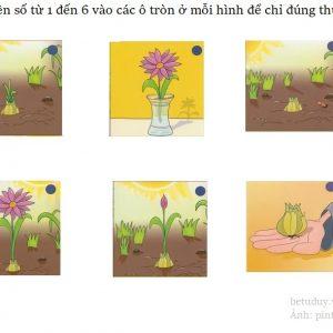 Thu tu trong hoa
