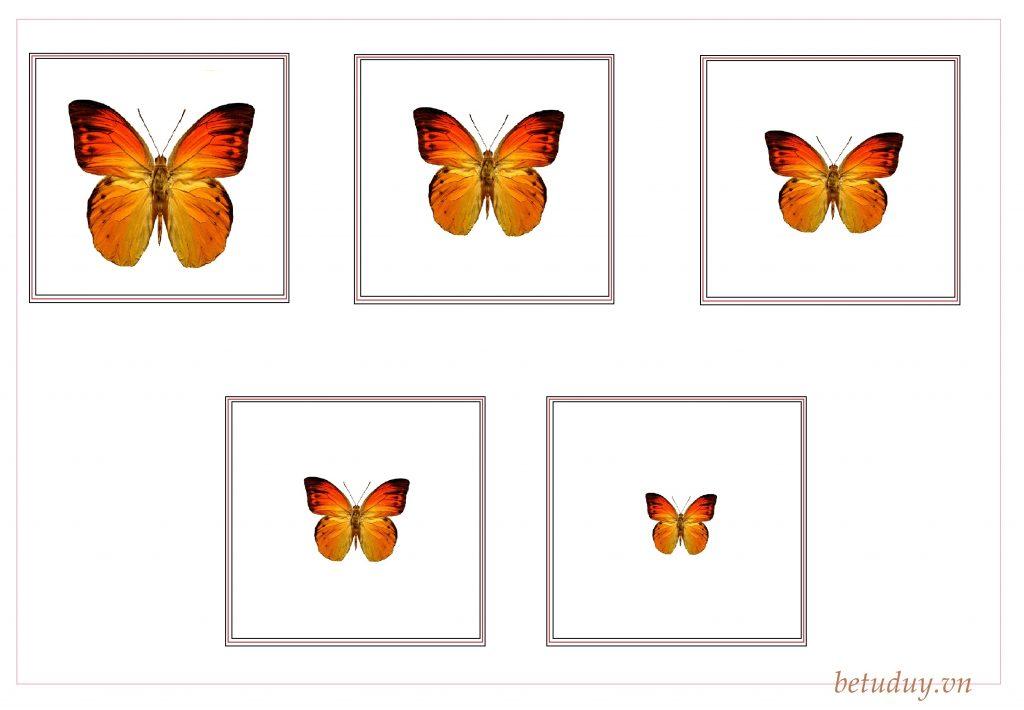 Sắp xếp lớn dần - bướm