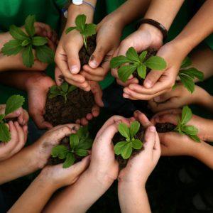 kids-planting-hands-800